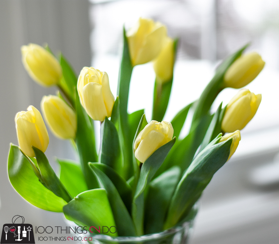 Tulip care, extending the life of your tulips, [...] </p srcset=