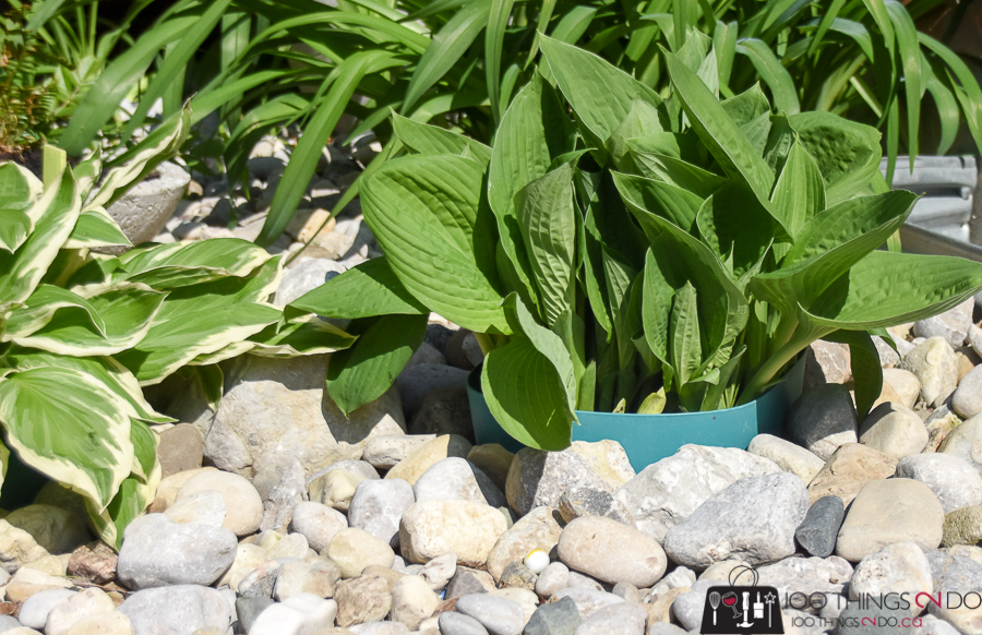 Plant protectors, hosta rings, rings for around the base of plants, rock garden rings