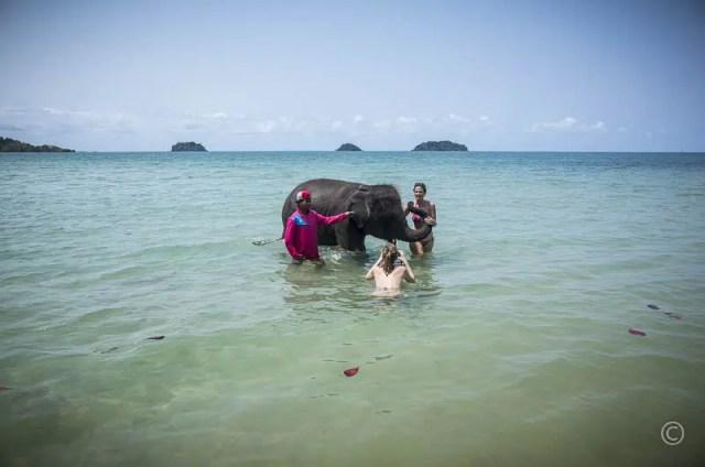 Elephant taking a bath