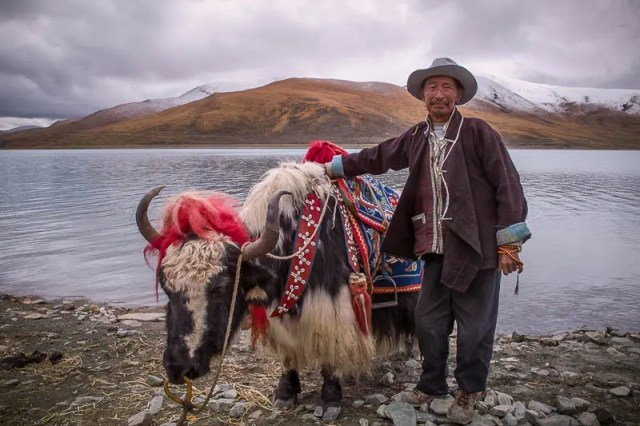 Tibetan man and yak