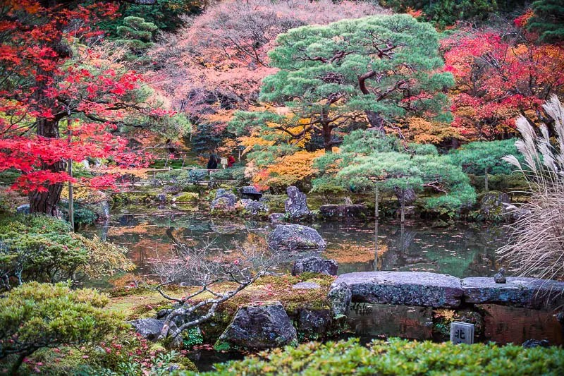 Japanese Garden in Fall, Kyoto