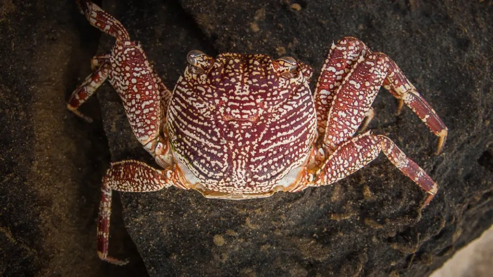 Shell of a crab