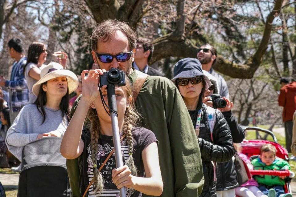 Father and daughter taking sakura photos