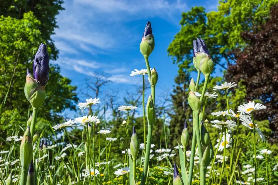 High Park Toronto flowers
