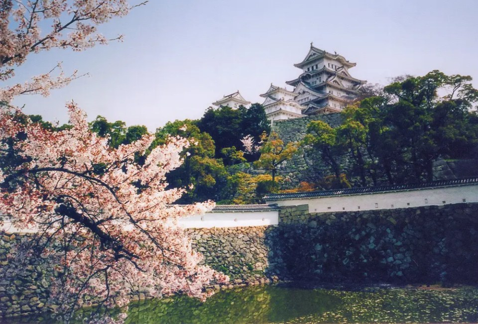 Cherry blossoms, lake and castle