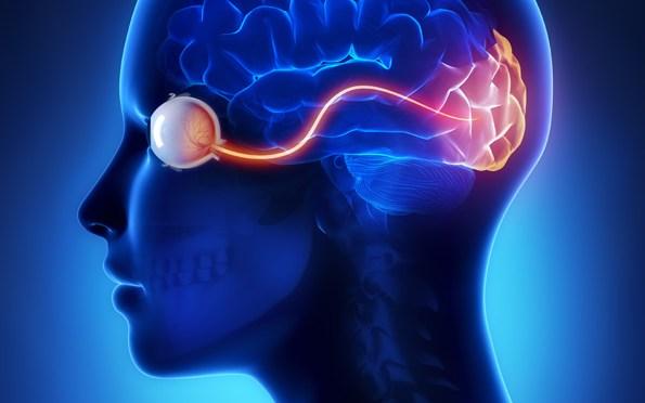 Une personne recouvre partiellement la vue après une thérapie optogénétique