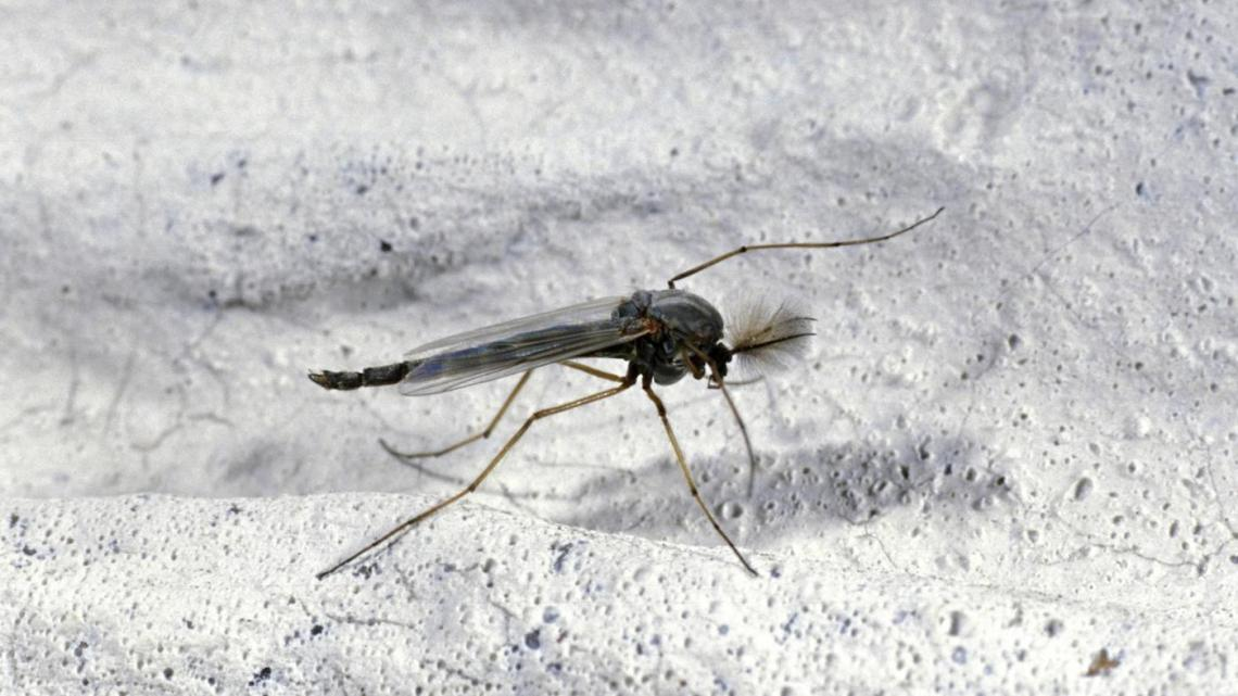 Image Result For How To Get Rid Of Gnats In The Bathroom