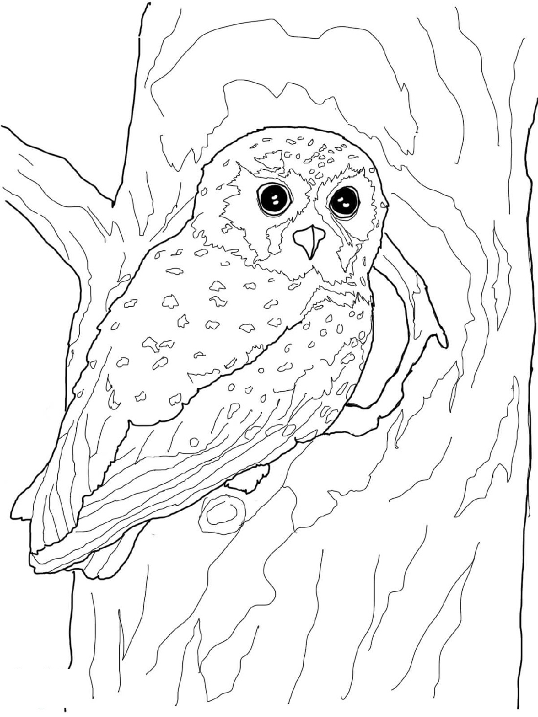 Printable Owl Coloring Pages Hard And Easy