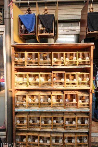 shanghai birds market-3