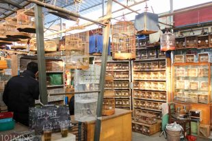 shanghai birds market-4