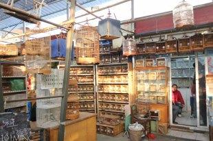 shanghai birds market-5