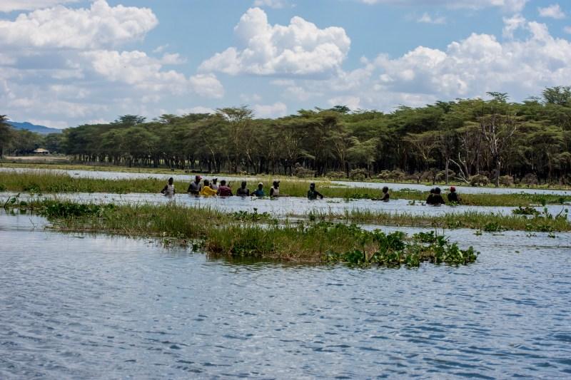 Хората ловят риба на няколко метра от групата хипопотами - Найваша, Кения