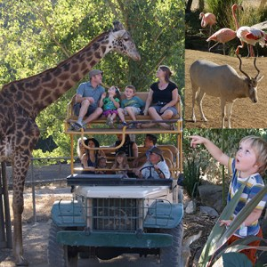 SafariWest_collage