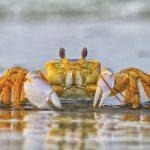 47.  Go Crabbing