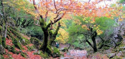 Πεζοπορία στο δάσος και το φαράγγι του Ρούβα