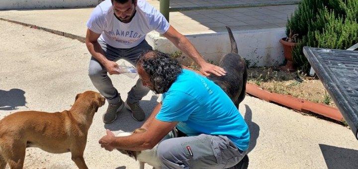 Σε υιοθεσία αδέσποτων ζώων προχώρησαν οι εργαζόμενοι στην Καθαριότητα του Δήμου Ηρακλείου