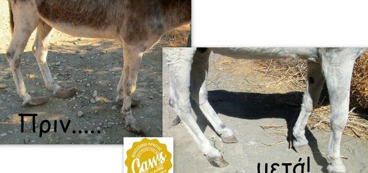 φροντίδα ιπποειδών ανοιξιάτικη επίσκεψη από τη Φιλοζωική Κρήτης