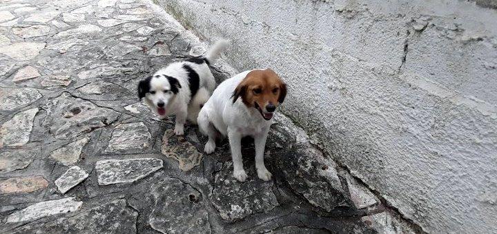 Ποιος θέλει να υιοθετήσει δύο σκυλάκια ;