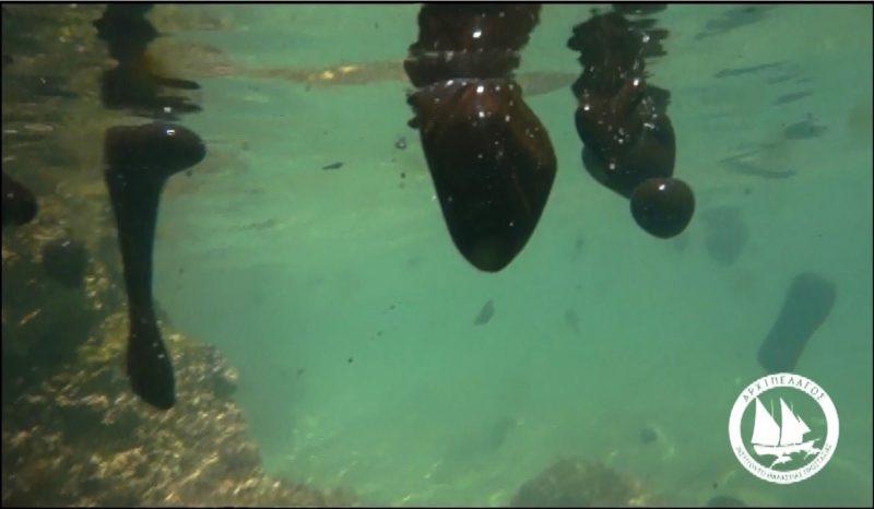 Αρχιπέλαγος, Ναυάγιο στο Σαρωνικό: Δέκα Ημέρες Μετά…