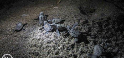 Θαλάσσιες Χελώνες στο Αιγαίο, ας συμβάλουμε όλοι στη προστασία τους