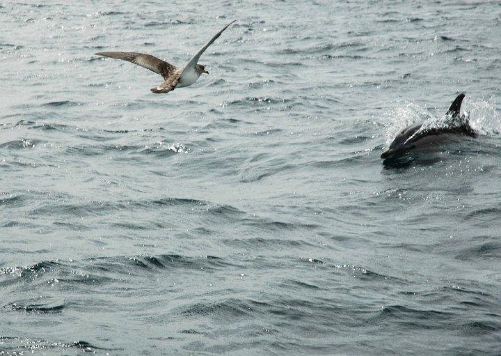 Ο γλάρος και το δελφίνι