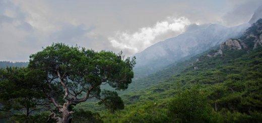 Την δημιουργία Συμβουλίου Ιδιοκτησίας Δασών Κρήτης ζητούν επτά βουλευτές