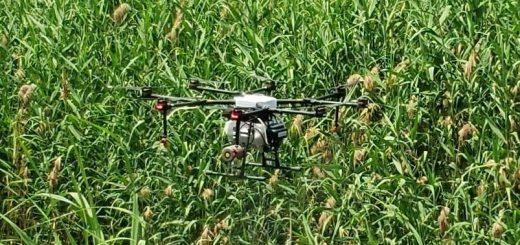 ψεκασμός με τη χρήση drone για το πρόβλημα των κουνουπιών