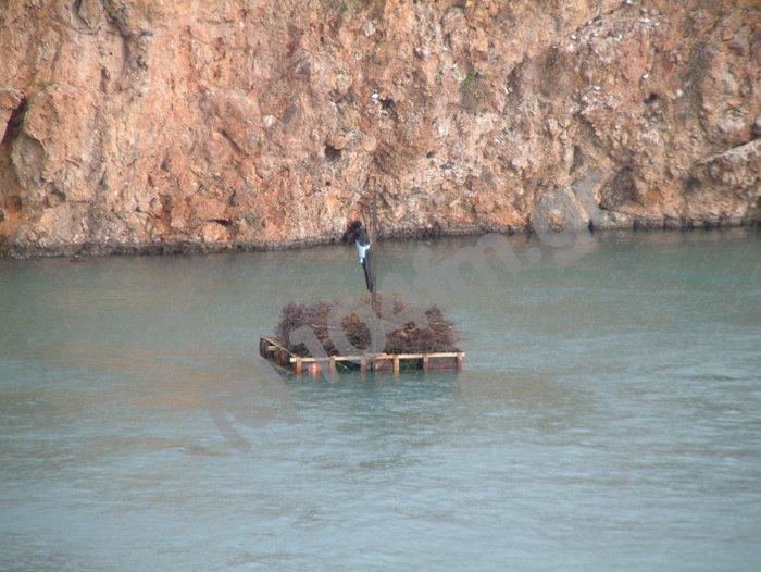 ο Ιούδας στη λίμνη του Αγίου Νικολάου, έτοιμος για το Μ. Σάββατο