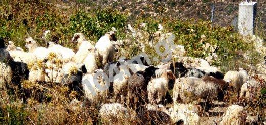 πάταξης της Ελληνοποίησης γάλακτος, προστασία των καταναλωτών