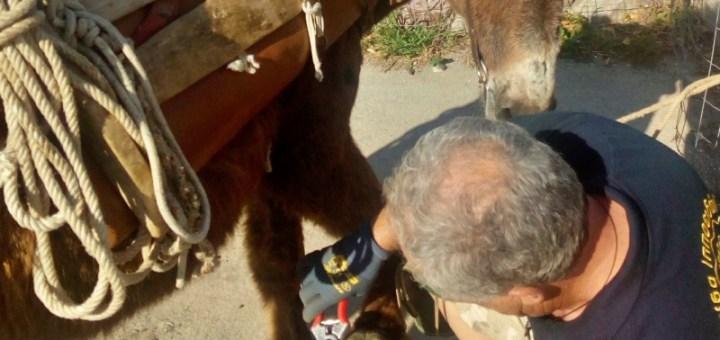 Φιλοζωική Κρήτης, φθινοπωρινό πρόγραμμα δράσεων για τη φροντίδα ιπποειδών
