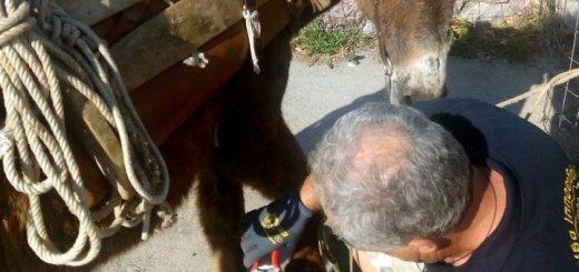 Φιλοζωική Κρήτης, φθινοπωρινό πρόγραμμα δράσεων για φροντίδα ιπποειδών
