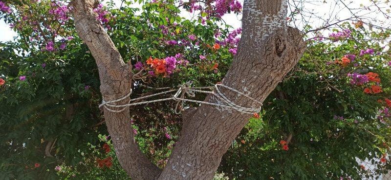 Για να μην πέσει το δέντρο......