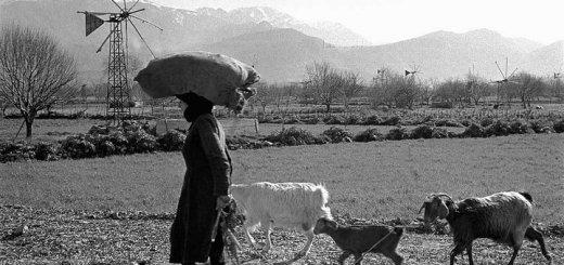 Παγκόσμια Ημέρα Αγρότισσας, μήνυμα Υπουργείου Αγρ. Ανάπτυξης