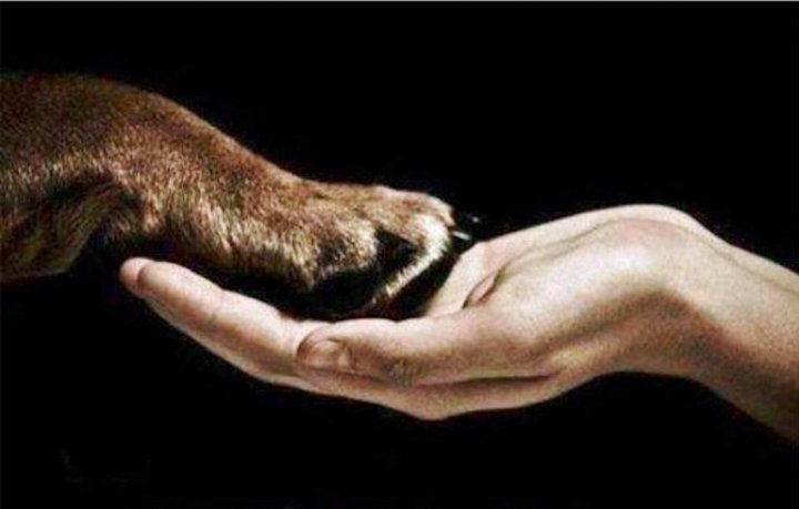 Κάλεσμα για υιοθεσία αδέσποτων σκυλιών