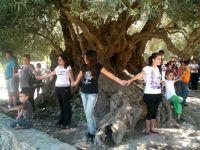 από τη συνάντηση, τα παιδιά προστατεύουν την αρχαία ελιά στον Αζωργιά