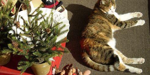 η γάτα άνετη στη βιτρίνα...