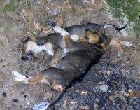 νεκρά σκυλιά