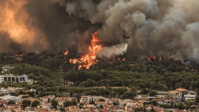 Πυρκαγιές και αναδασώσεις: Προμηθείς…