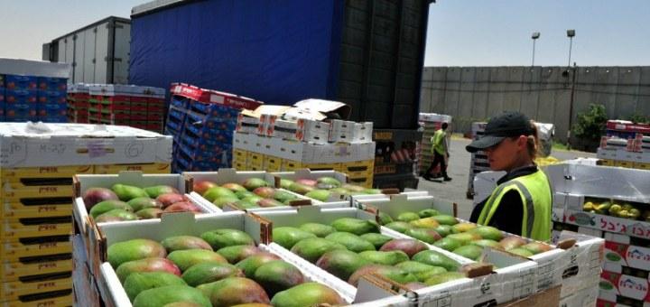 Επίσημοι έλεγχοι της ΕΕ στις εισαγωγές τροφίμων γενικοί όροι και μέτρα