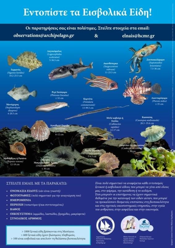 Πρώτη καταγραφή στην Ελλάδα νέου ξενικού είδους ψαριού