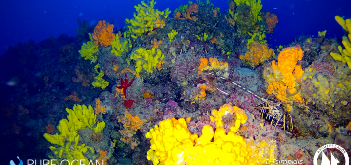 Κοραλλιγενείς Οικότοποι: Επιτακτική Ανάγκη Άμεσης Προστασίας