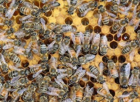 ενεργά μελισσοκομικά προγράμματα