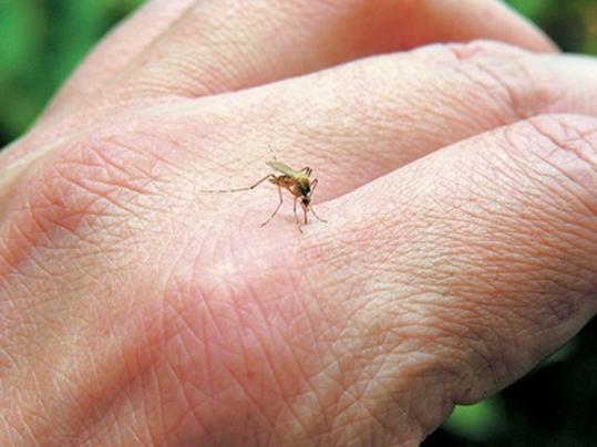η 7η Υ.ΠΕ., για κρούσματα ελονοσίας