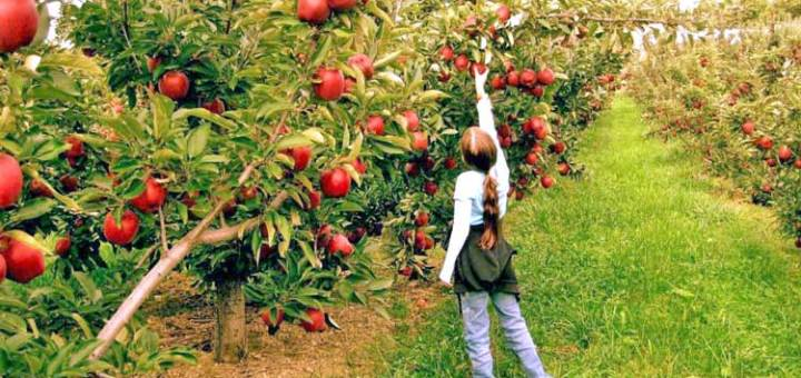 εγκατάσταση 12.000 νέων αγροτών ενίσχυση 241 εκατ. ευρώ