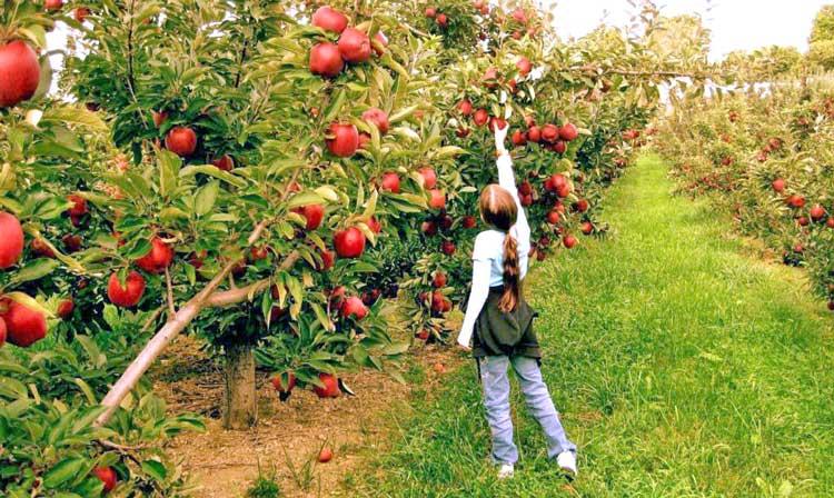 Συγκεντρωτικές καταστάσεις αγροτών ειδικού καθεστώτος ΕΠΕΙΓΟΝ
