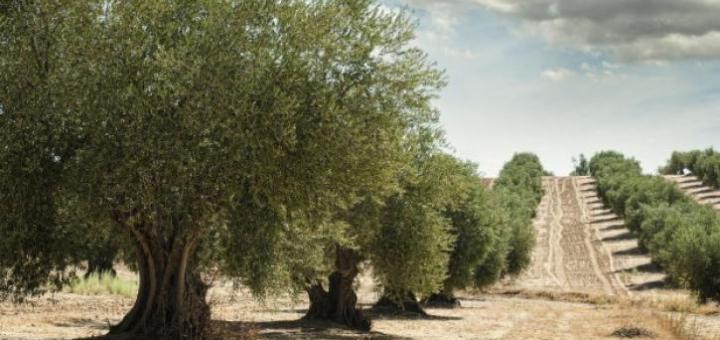 Αγρότες Σητείας για άρνηση θέσης Δημοτικής Αρχής