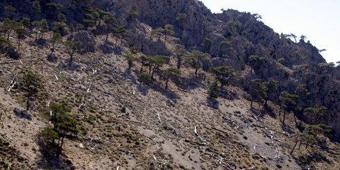κάποια δέντρα είναι όρθρια, κάποια κείτονται, πεσόντες, της ανάπτυξης. Δάσος στο Ορεινό