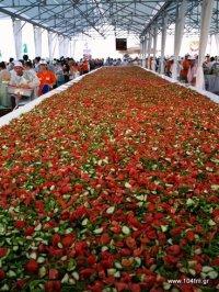 η μεγαλύτερη σαλάτα στο κόσμο, πριν πέσει το κρεμμύδι και η φέτα