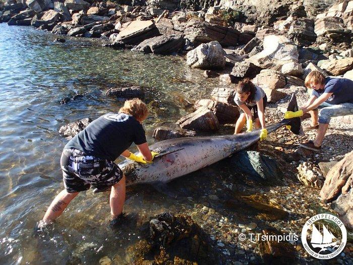 το άτυχο ρινοδέλφινο εντοπίστηκε νεκρό σε απόκρημνη περιοχή της νότιας Σάμου