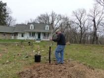Planting Bur Oak